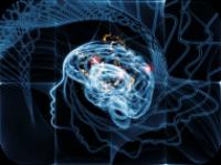 hersenen ontwikkeling