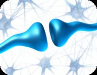 hersenverbinding